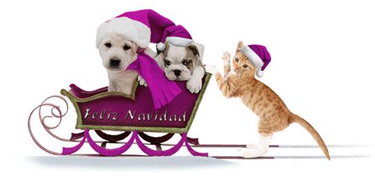 trineo perros y gato